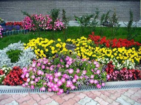 Photo examples of the decoration of the flower garden