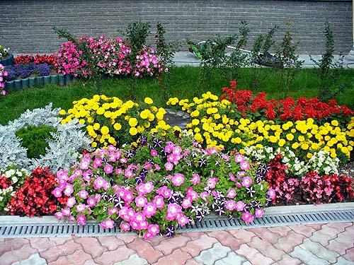 Как распределить цветы на клумбе