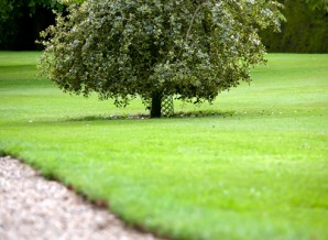 The most suitable species of trees and shrubs for the lawn
