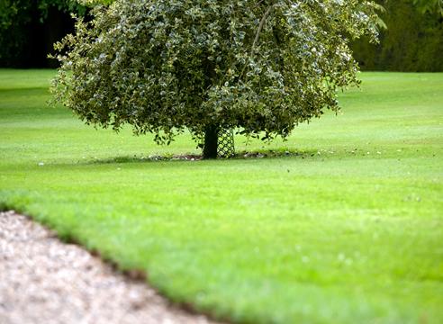 Деревья для газонов