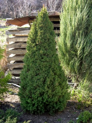 Trees for the garden: combine a decorative function with the natural benefits of the site