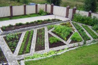The unusual design vegetable beds