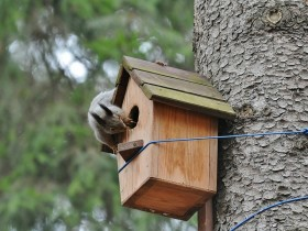 Wooden house for squirrels