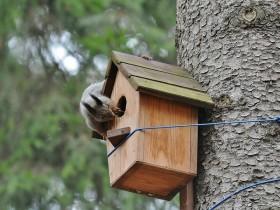 Дерев'яний будиночок для білки