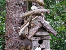 A house for the squirrels with their hands