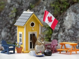 Домик для белки с флагом Канады