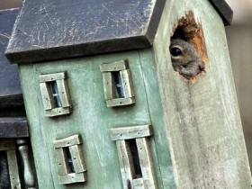 Creative house for squirrels