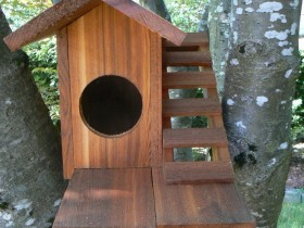 The original house for squirrels