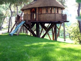 The design of the tree house