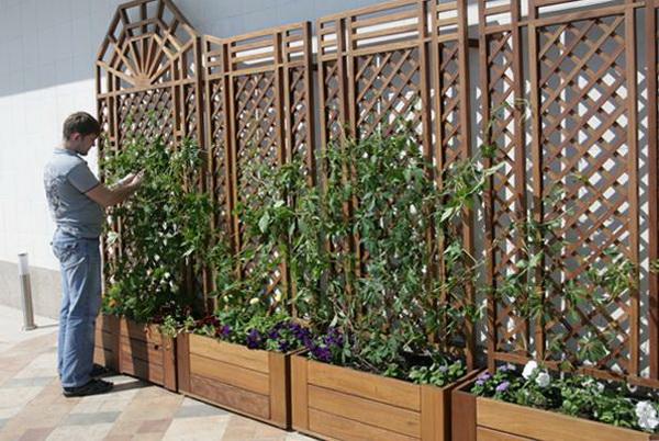 Выбираем растения для перголы