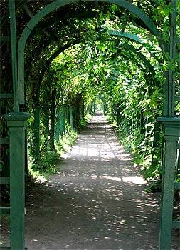 Зеленый коридор из пергол