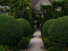 Trimmed bushes - topiary