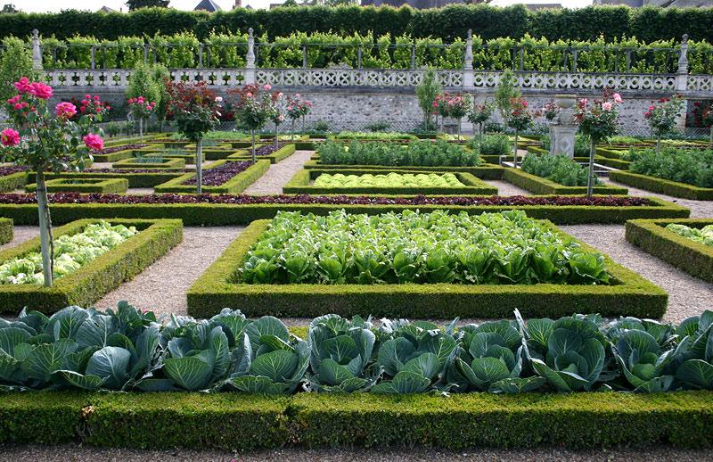 Растительный мир регулярного сада