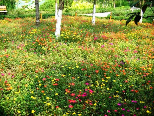 Маўрытанскі газон