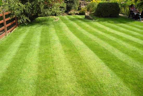 Вид садово-паркового газона