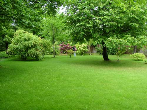 Как выглядит обыкновенный газон на дачном участке