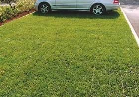 Plastic grass paver