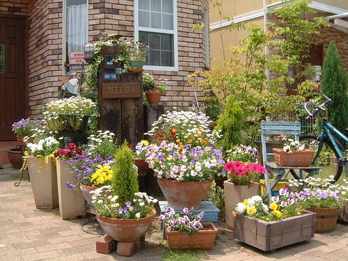 Рассаживание декоративных кустарников и цветов в горшки