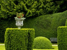 Trimmed bushes