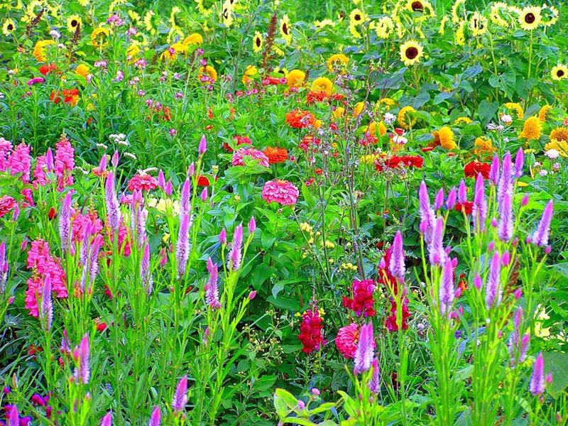 Растения в кантри саду