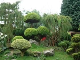 Кітайскі сад