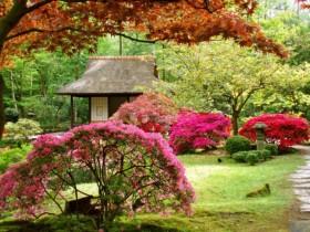 Дызайн саду