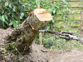 Uprooting a stump with a winch