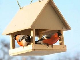 How to assemble a bird feeder and a birdhouse for the birds with their hands. 50 Photos ideas decorative design + video