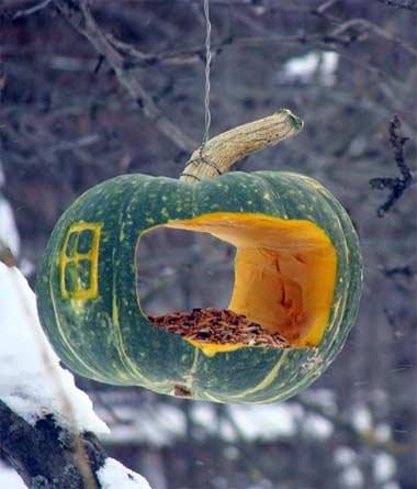 Кормушка для птиц из тыквы, легко сделать самостоятельно и покормить птиц.
