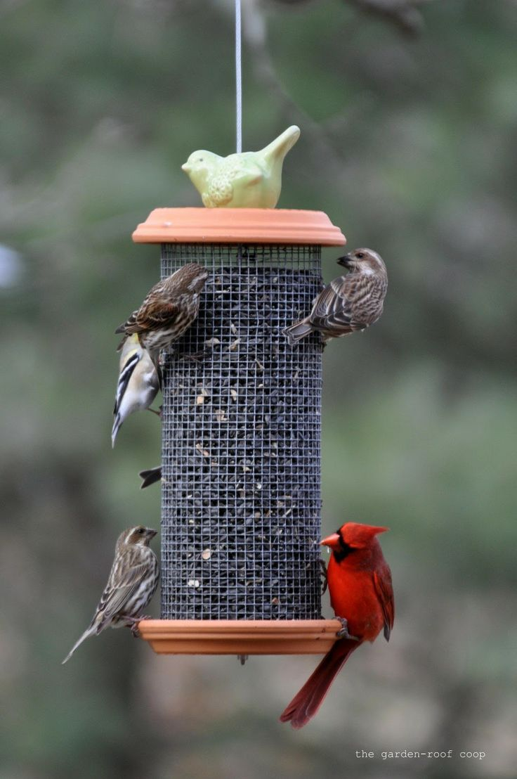 Оригинальные кормушек для птиц своими руками