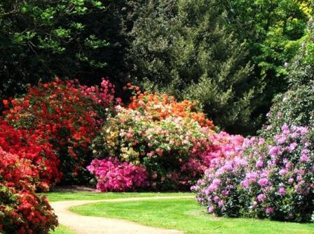 лен садовый фото
