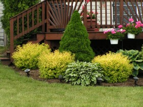 Decoration garden perennial shrubs