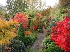 Decoration garden perennial shrubs