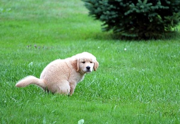 Вред домашних животных газону