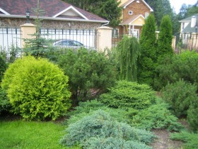 Mixborders of conifers