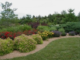 Shrubs in mixborders