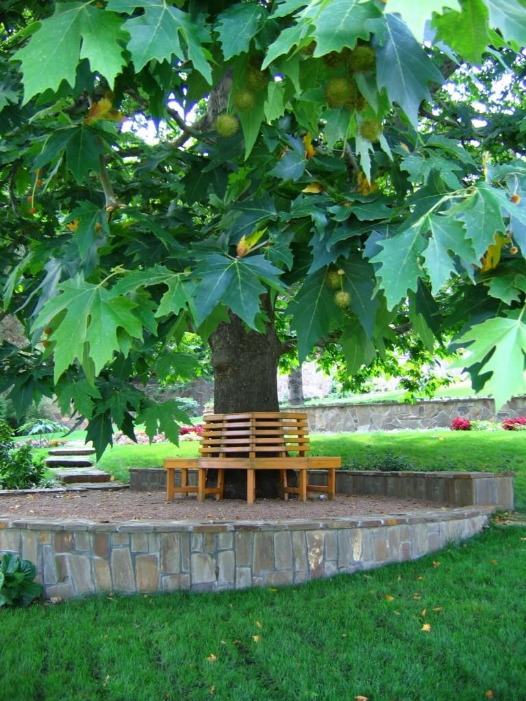 Деревья для сада в стиле модерн