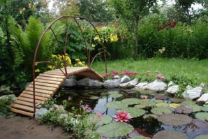 Create a pond with water lilies: photos of plants + care instructions