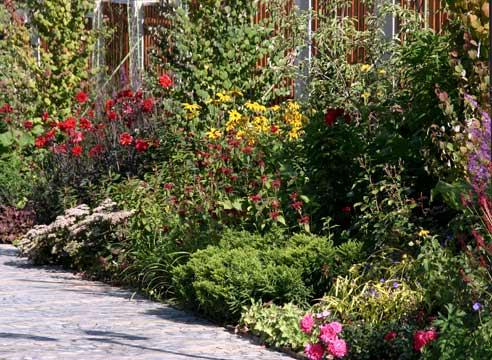 Растения для природного сада