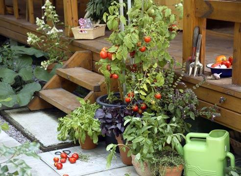 Фото сад и огород своими руками