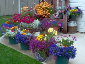 Front garden with flowers in pots