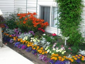 Front garden with low-growing flowers