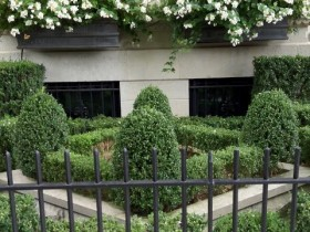 Front garden with topiary