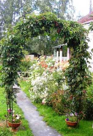 Украшение перголы вьющимися растениями