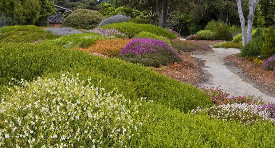 Растительный мир английского сада