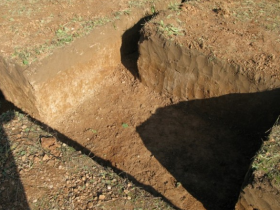 Loamy soil on the site