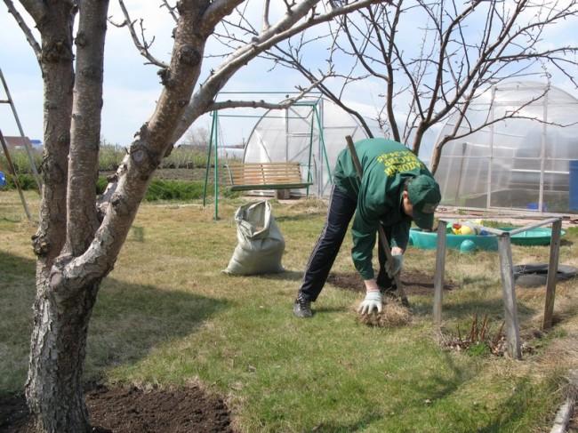 Подготовка земной поверхности: очистка от садового мусора и камней