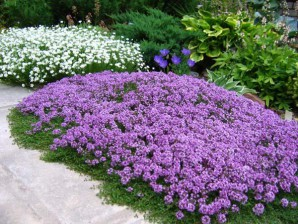 The advantage of groundcover plants in the suburban area