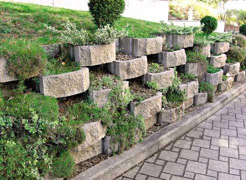 Растения в подпорной стенке
