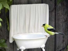 Design birdbaths